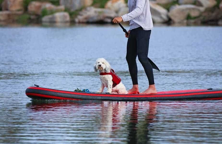 Small Dog on a Stand Up Paddleboard with a Woman